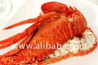 Live Lobster from Chile