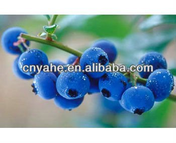 Blueberry flavour for daily food