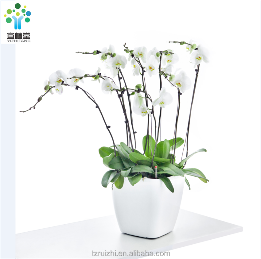 White Glazed self watering planters orchid plants Plastic flower pots