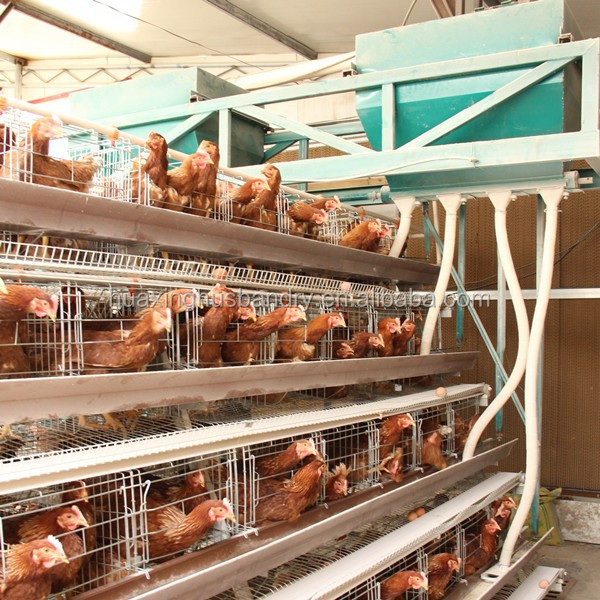 Commercial Chicken House commercial layer chicken house, commercial layer chicken house