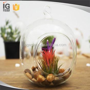 Glass Capsule Plant Orb Terrarium For Sale