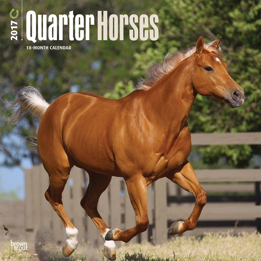 Quarter Horses Calendar 2017 ~ Deluxe Wall Calendar (12x12)