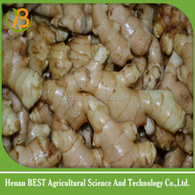 Price of fresh ginger and garlic/ specification