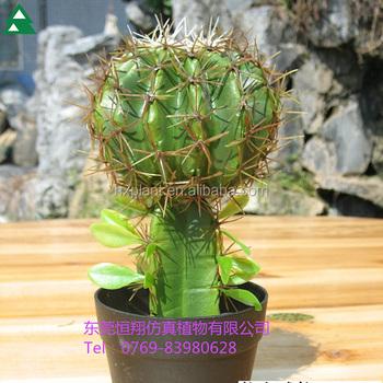 Christmas Cactus Plant.Plastic Indoor Cactus Plants Cactus Flowering Plants Christmas Cactus Plant Buy Artificial Cactus Plants Christmas Cactus Plant Cactus Flowering
