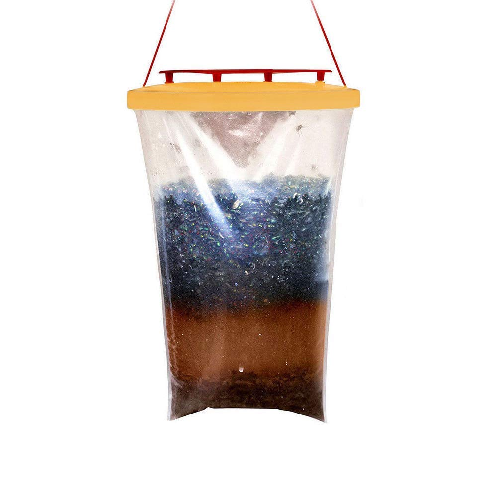 Buy DLseego Disposable Fly Trap - 100% Non-Toxic Fly Catcher