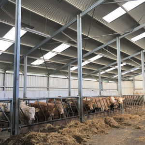 Goat Farm Design Steel Structure Farming Shed Prefabricated