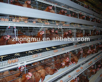 egg layer chicken house design for layers in kenya buy egg layer