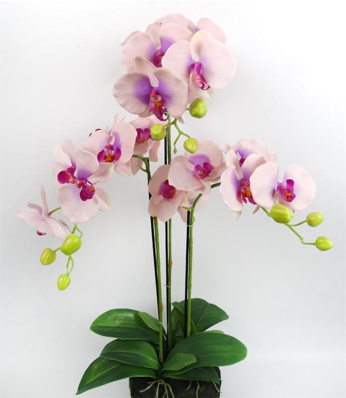 Москва купить оптом цветы орхидеи, россии доставка