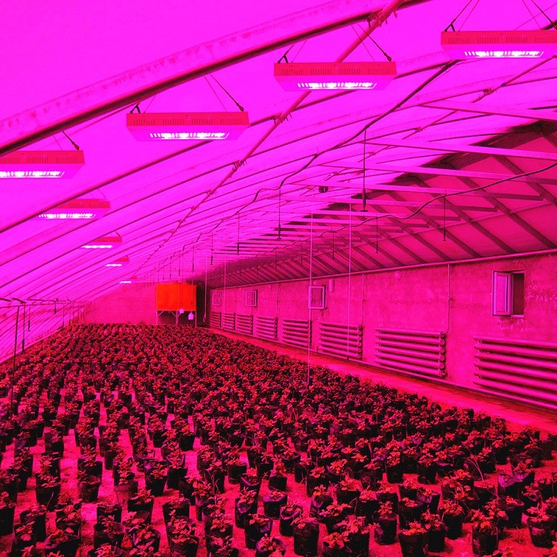high quality ip65 waterproof 350w plant grow lights lowes. Black Bedroom Furniture Sets. Home Design Ideas