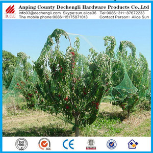 Chinese manufacturers fruit tree planting protecting net/bird netting