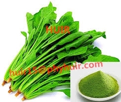 Pure Natural 5:1,10:1,20:1 Spinach Powder Spinach Extract