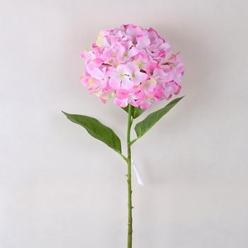 Download 95 Gambar Bunga Pink HD Paling Keren