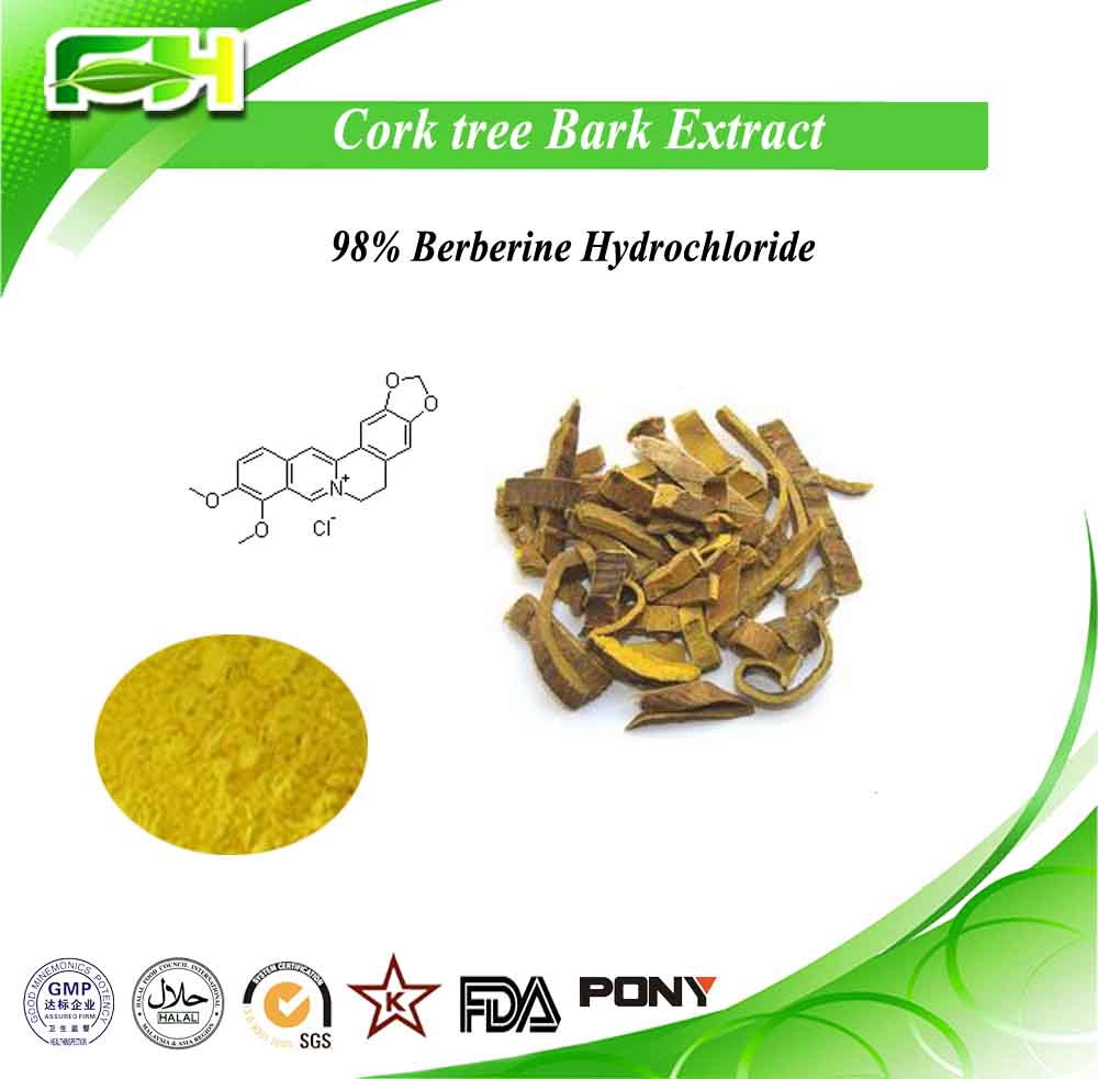 High Quality 97% Berberine Hydrochlorides powder from Coptis chinensis