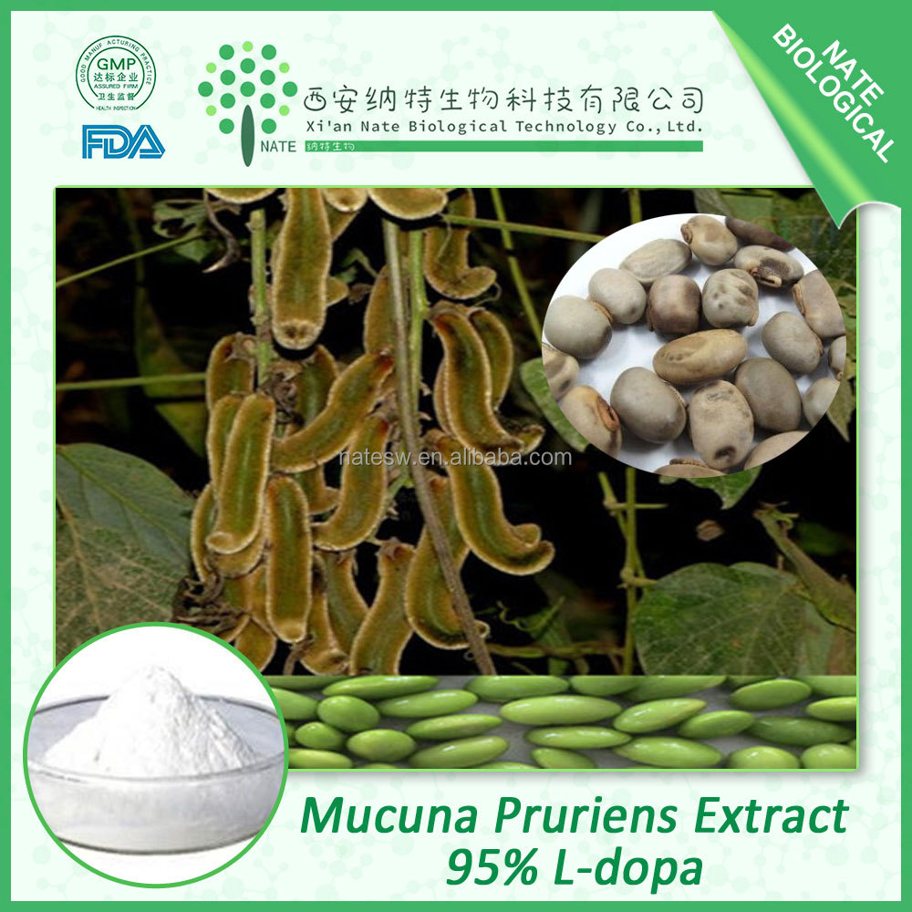 Chinese herbal extract organic mucuna pruriens extract 95% l-dopa