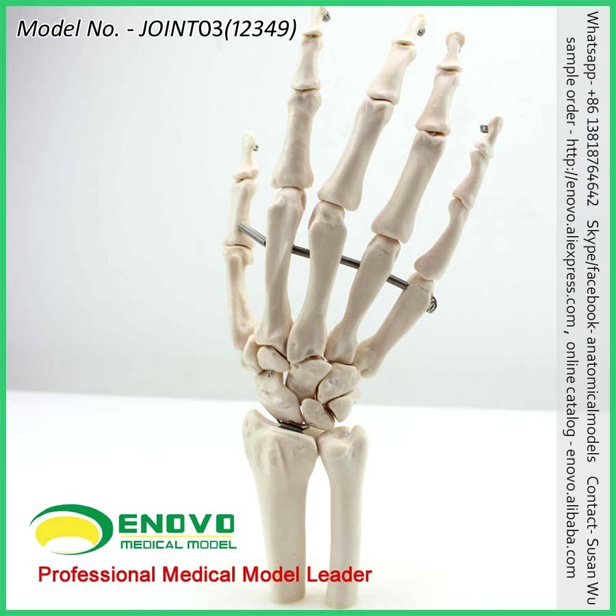 Mano al por mayor esqueleto 12349 tamaño natural mano humana ...