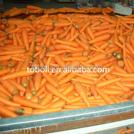 s or m or l or 2l and up, 2017 new crop Fresh vegetable fresh carrot