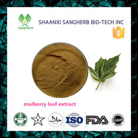 100% herb mulberry Leaf Extract 1-Deoxynojirimycin diabetes products with top quality