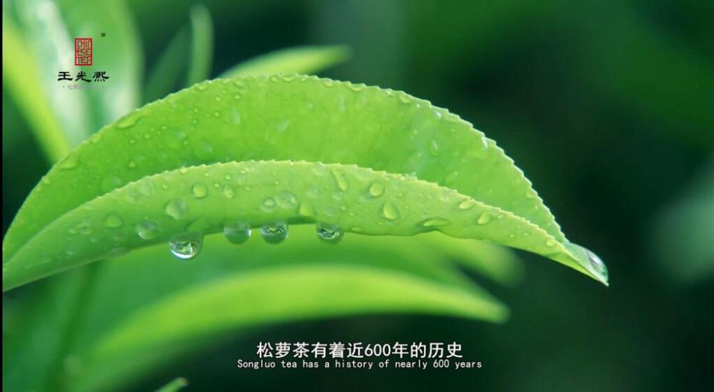 High mountain superfine green tea from tea factory - 4uTea | 4uTea.com