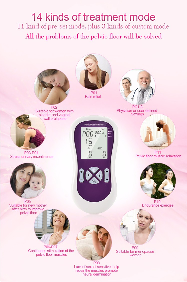 Female And Male Pelvic Model For Pelvic Floor Muscle Trainer With Ce