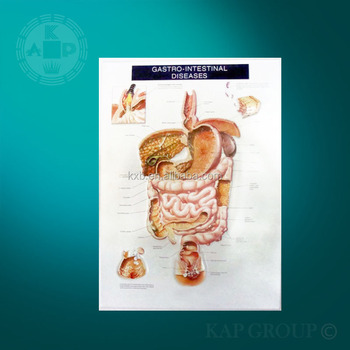 Educación 3d Anatómica Gráficos Estómago Anatomía Pared Gráfico ...