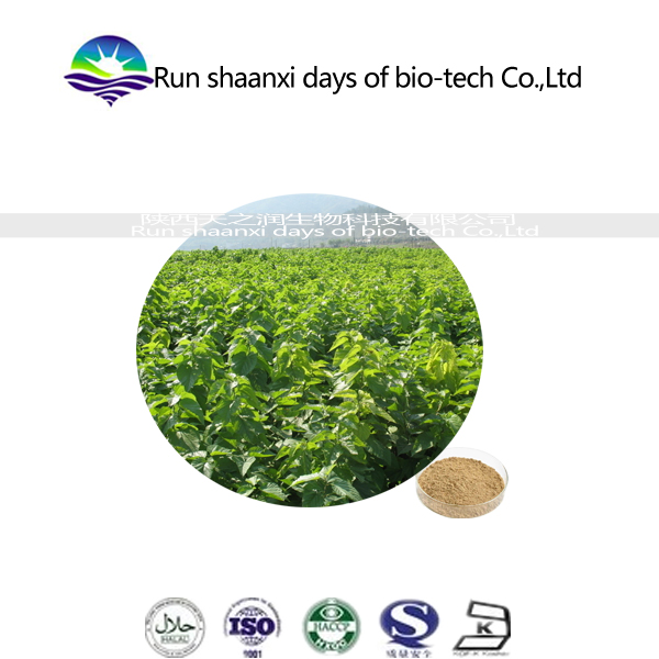 100% Organic Mulberry Leaf /mulberry fruit extract