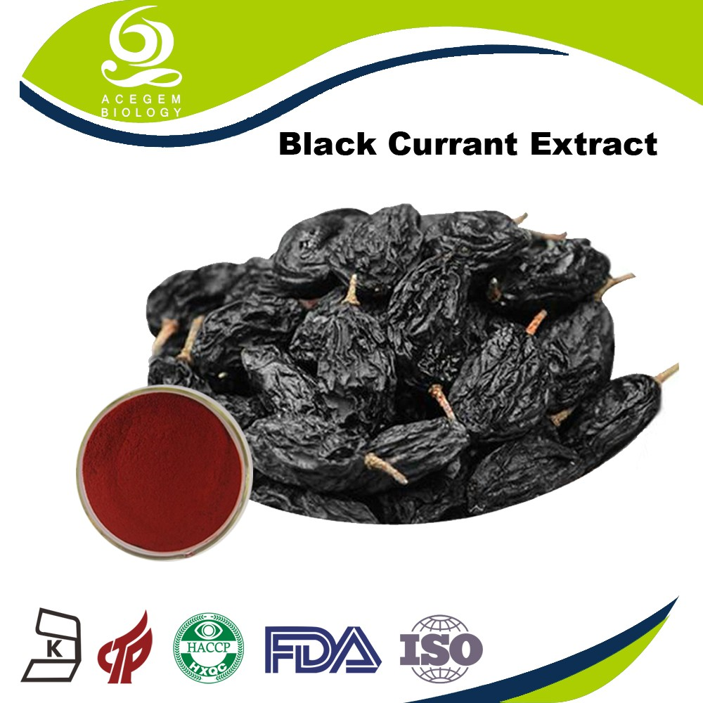 Wholesale Price Fresh Blushwood Berry Powder Black Currant Extract Black Currant Dried Fruit