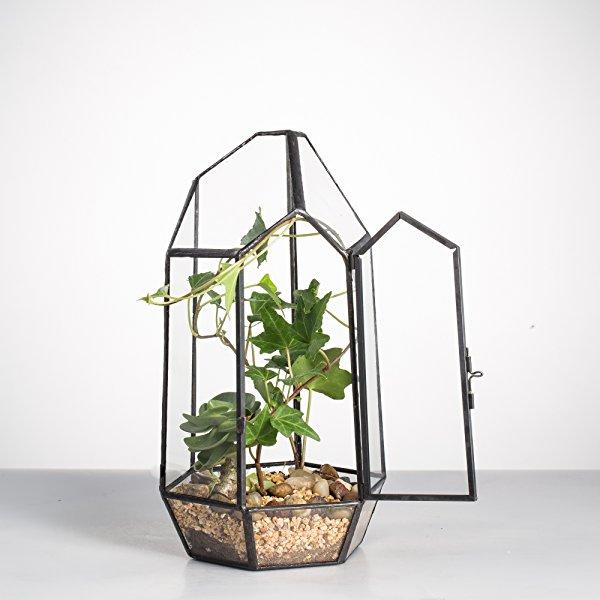 8 66 Height Glass Geometric Succulent Plant Closed Terrarium