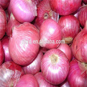 China food fresh onion vegetable exported to dubai