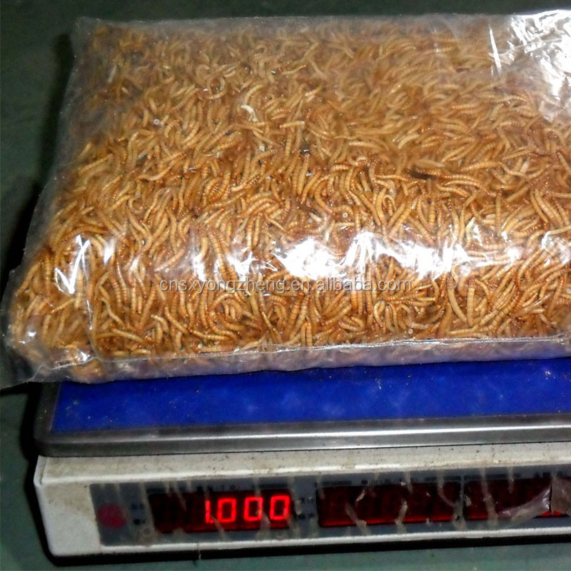 concentrated feed dried mealworm