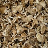 export dried oyster mushroom at good price