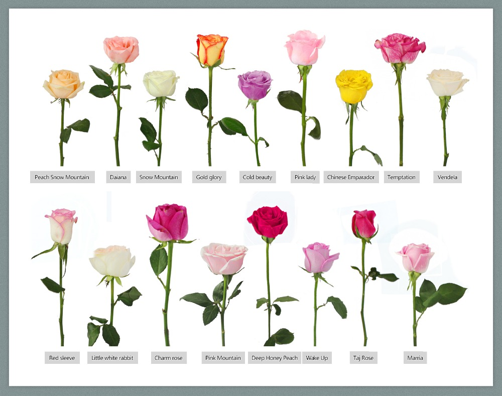 different types of flowers, Beautiful flower