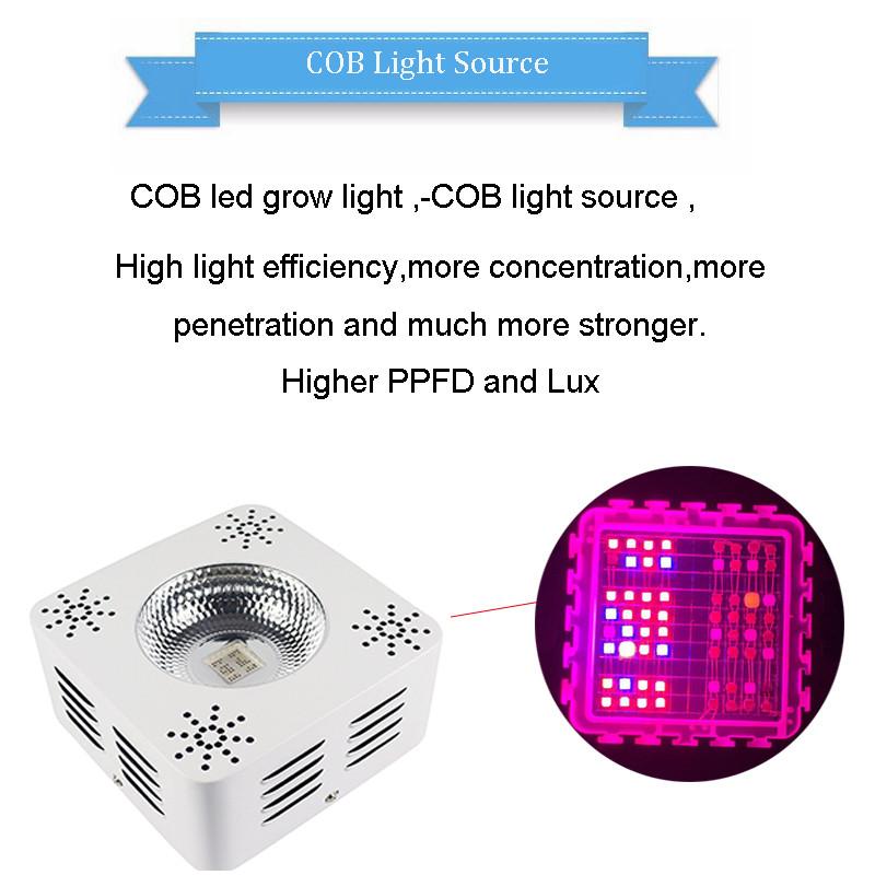 1000 w led grow 1000w cob led grow light 1000 led grow lights cob. Black Bedroom Furniture Sets. Home Design Ideas