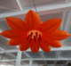 LED inflatable hanging flower, orange inflatable lighting balloon C2010-9