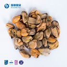 HACCP Good Shellfish Mussel Good Price Top Quality Shellfish Frozen Common Half Shell Mussel