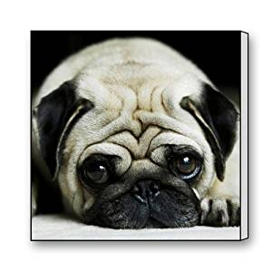 """Best-selling,100% Brand New,Pug Puppy Theme Canvas Print(Frame Also Included)- Measure Size:16(L)"""" X 16(W)"""""""