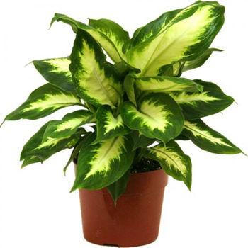 Natural Indoor Plants