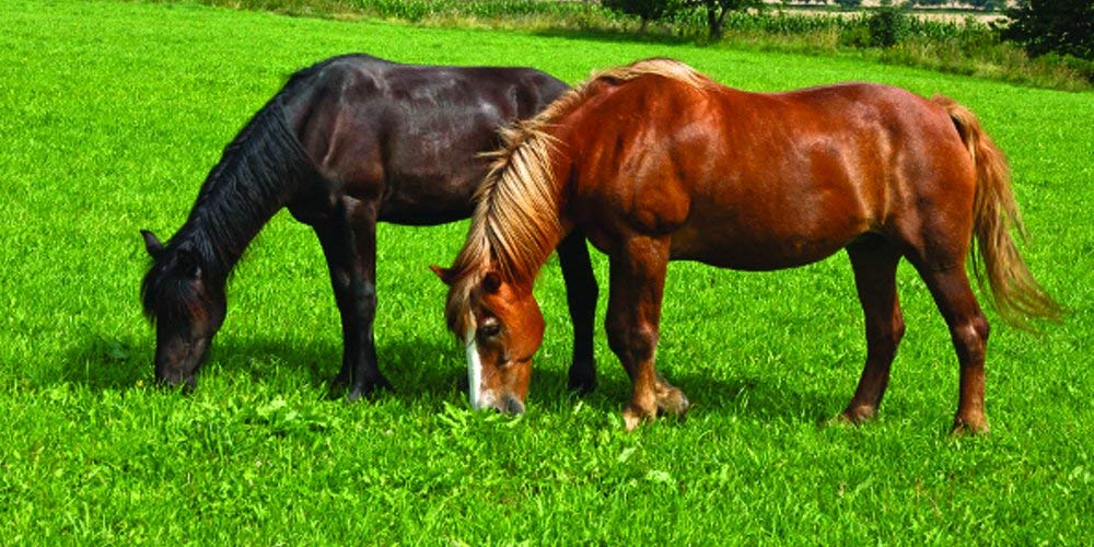 Nature's Seed PB-IWH-0.5-A 0.5 Acre Intermountain West Horse Pasture Blend