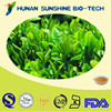 Food additives100% pure organic bio natural green tea extract