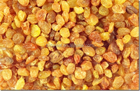 We are supply AD Sweet Dried golden Raisins for sale