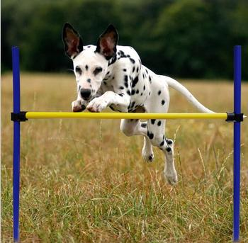 Pet Training Jump Hurdle Bar Dog Agility Perfamence Training Equipment set with carrying case