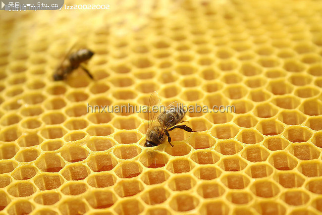 best bee wax foundation beeswax foundation for beekeeper