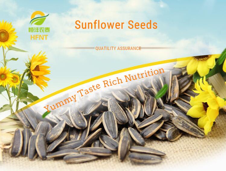 Groß billige sunflower samen für extrakt öl für verkauf günstigen preis