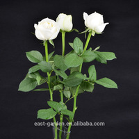 Fashion rose style roses at price with great