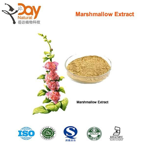 Competitive Price Natural Wholesale Malvaceae Powder
