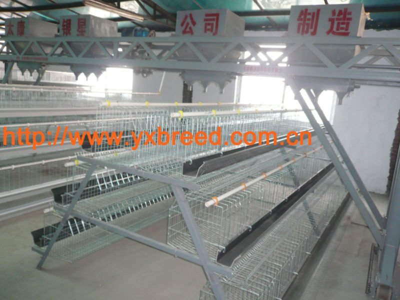 layer and broiler farm poultry equipment companys