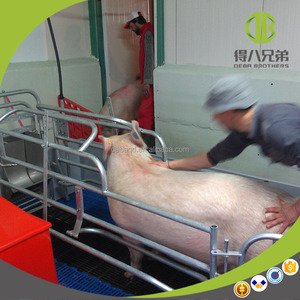 Galvanized Pig Farrowing Crate for Sow Pig Raising Equipment