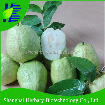 2019 Hot Sale Guava Seeds For Planting - Buy Guava Tree,Psidium  Guajava,Hybrid Fruit Seed Product on Alibaba com