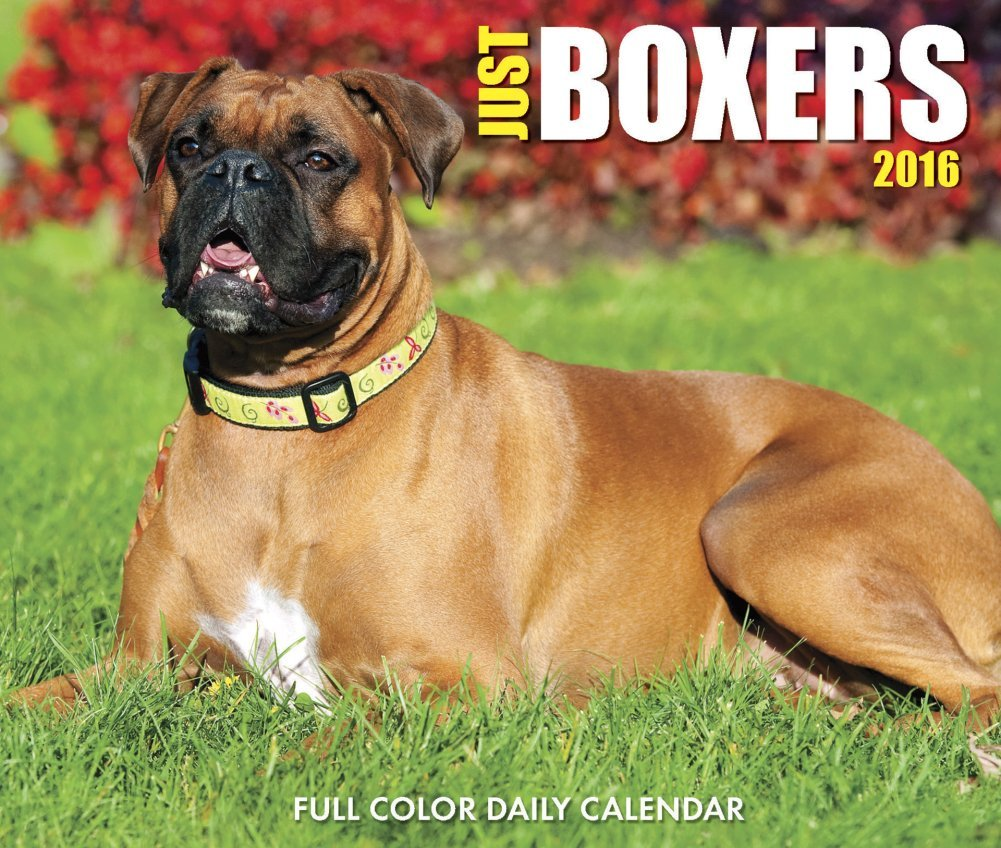 Just Boxers - 2016 Boxed Calendar 6 x 5in