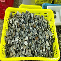 high quality cooked frozen whole vacuum baby clam from factory