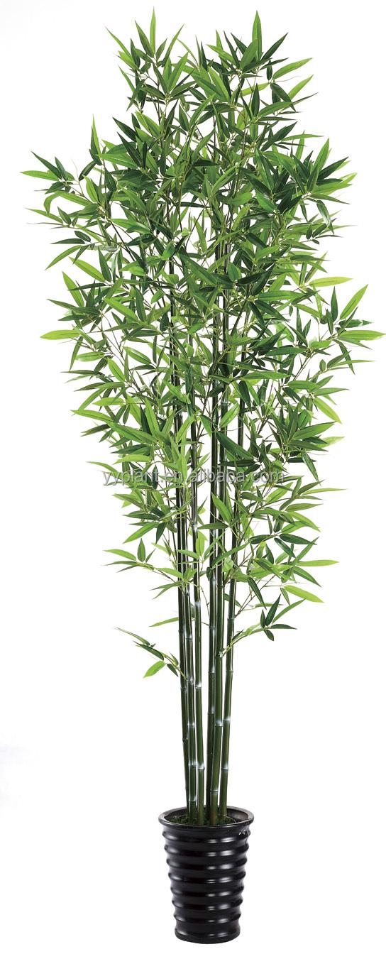 Foto italian molte gallerie fotografiche molte su alibaba for Pianta bambu prezzo